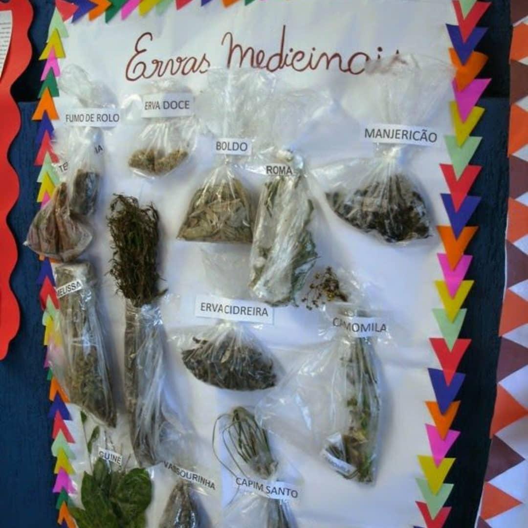 Mural de Plantas e Ervas Medicinais Indígenas